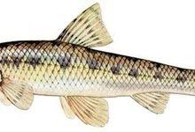 Pisciculture Vanbelle Erick - Nos élevages de poissons d'eau douce